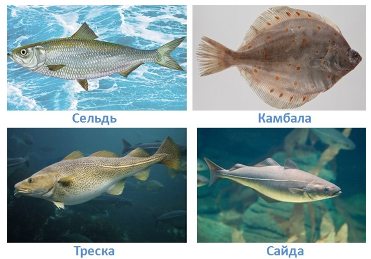 7 vodnye obekty rossii