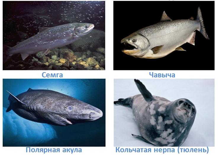 8 vodnye obekty rossii