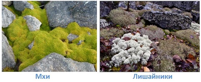 3 prirodnye zony rossii
