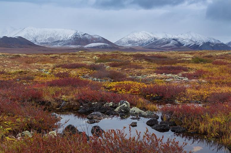 7 prirodnye zony rossii