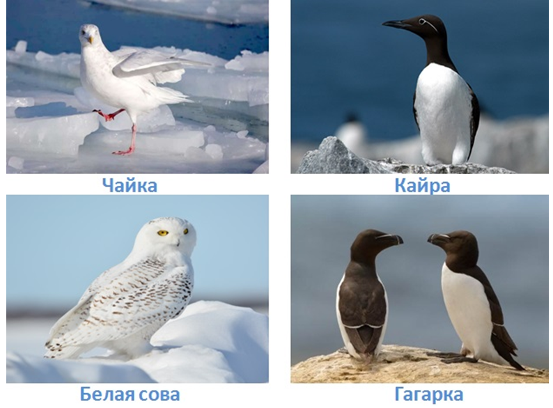 6 prirodnye zony rossii