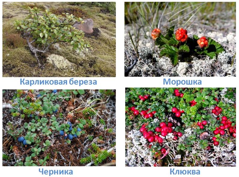 8 prirodnye zony rossii