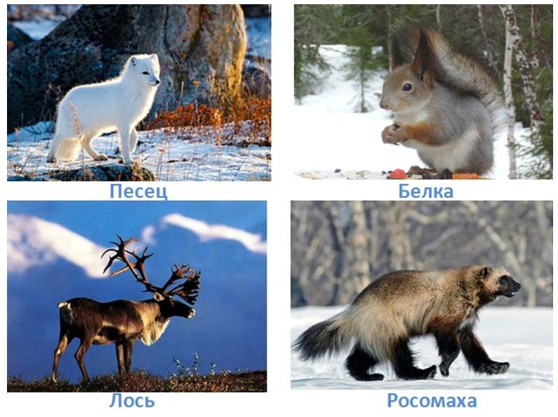 9 prirodnye zony rossii