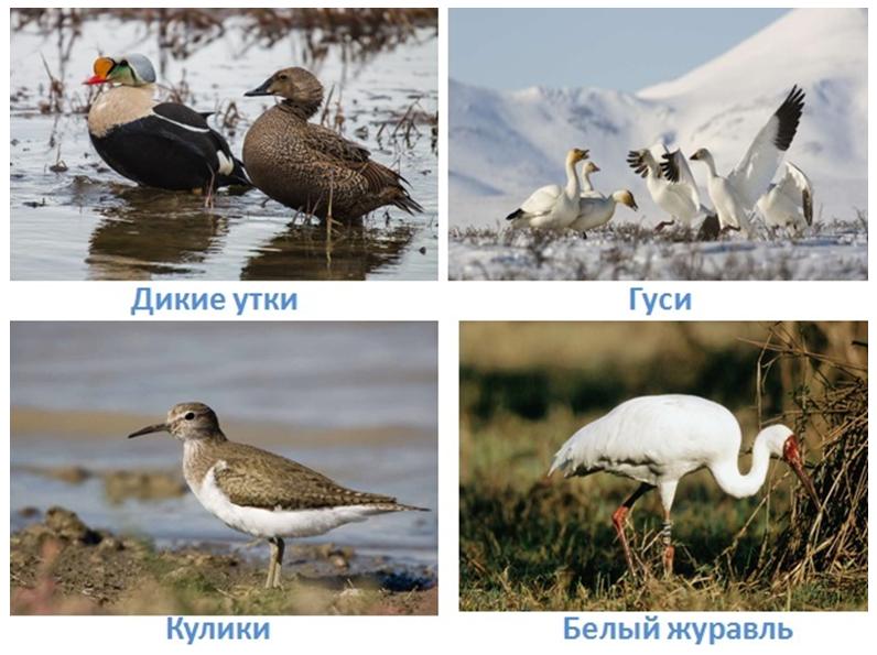 10 prirodnye zony rossii