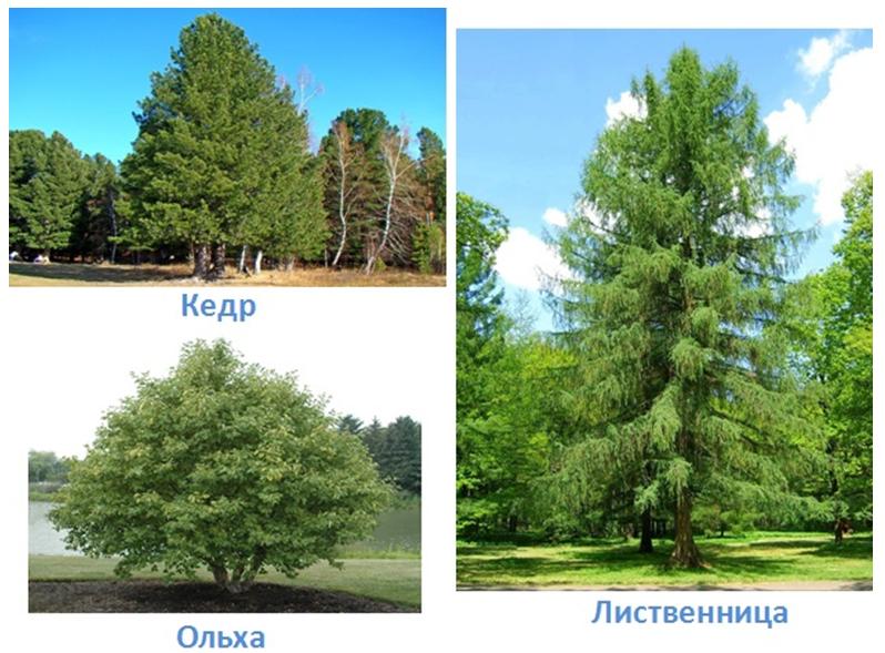 11 prirodnye zony rossii