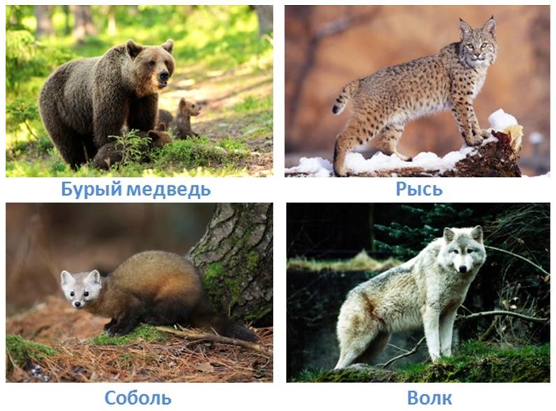 12 prirodnye zony rossii