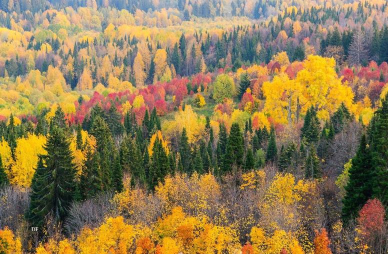 15 prirodnye zony rossii