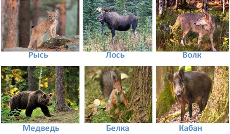 16 prirodnye zony rossii