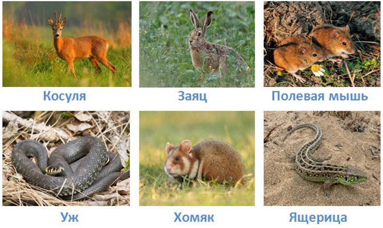 18 prirodnye zony rossii