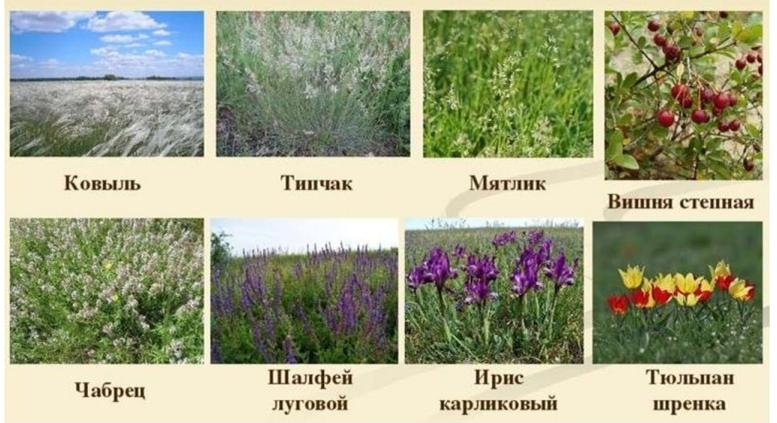 20 prirodnye zony rossii