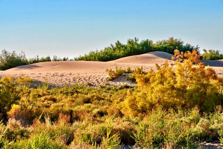 22 prirodnye zony rossii