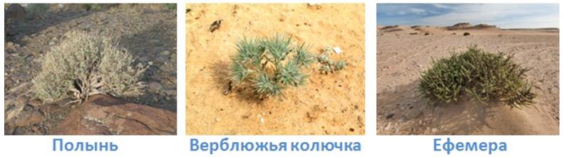 23 prirodnye zony rossii