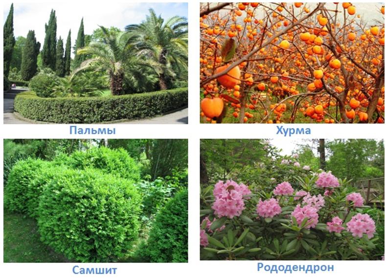 27 prirodnye zony rossii
