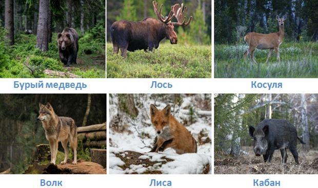 6 lesa rossii