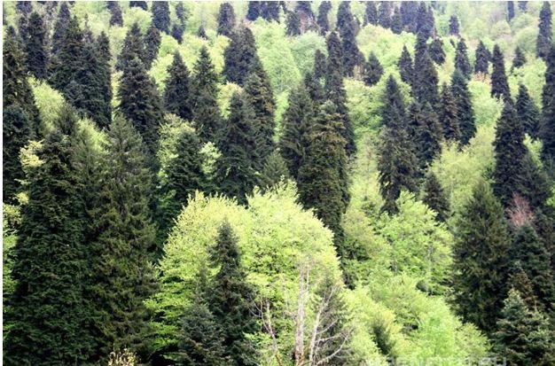4 lesa rossii