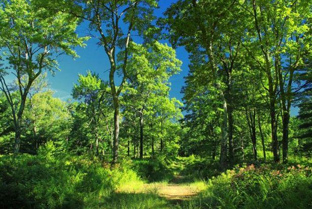 3 lesa rossii