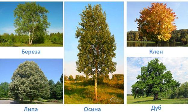 18 lesa rossii