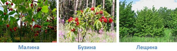 19 lesa rossii