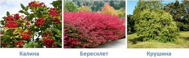 21 lesa rossii