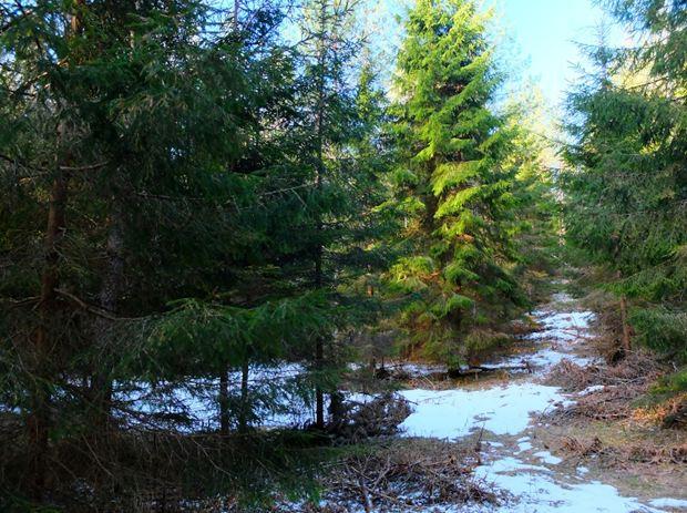 31 lesa rossii