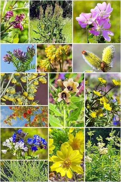 8depositofotos 88501068 plantas de tallos en siberia